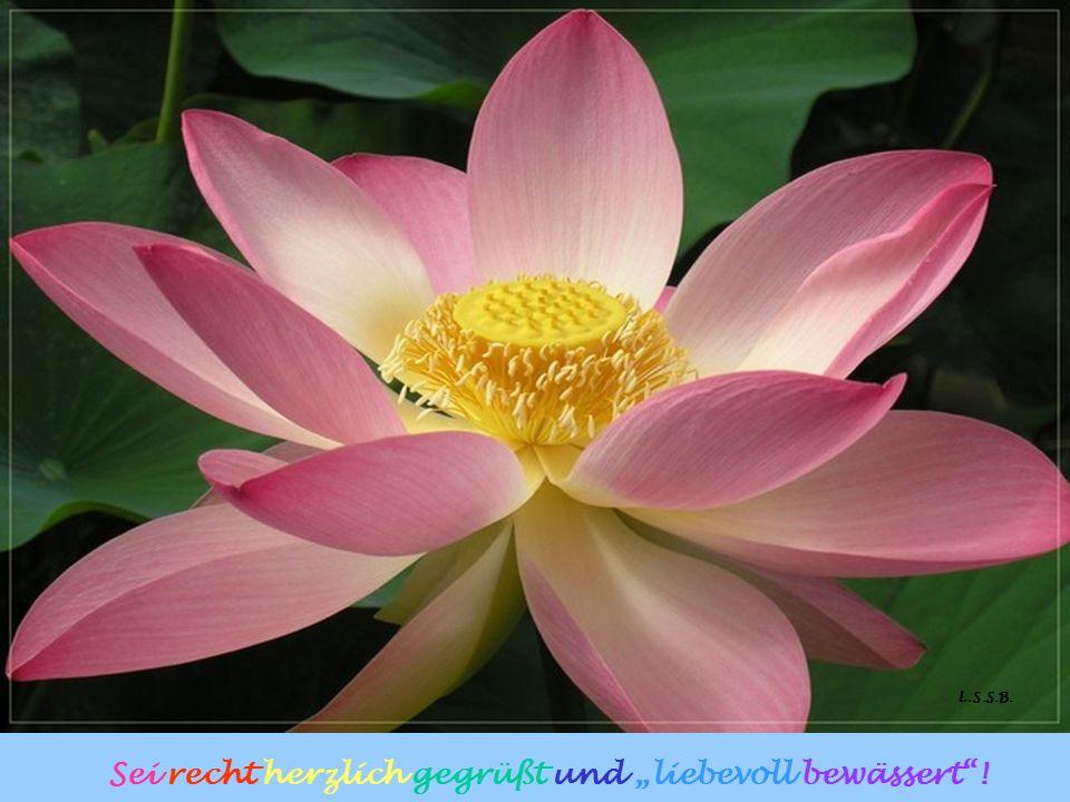Und Du? Denn so sind die Gaben Gottes: Er schenkt sie uns, doch wir müssen darauf acht geben. Denke an die Blume! Achtest Du auf seine Geschenke?