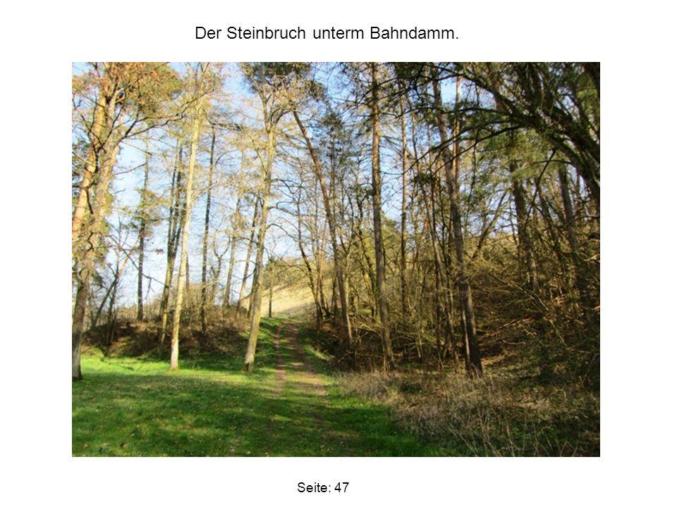 Seite: 47 Der Steinbruch unterm Bahndamm.