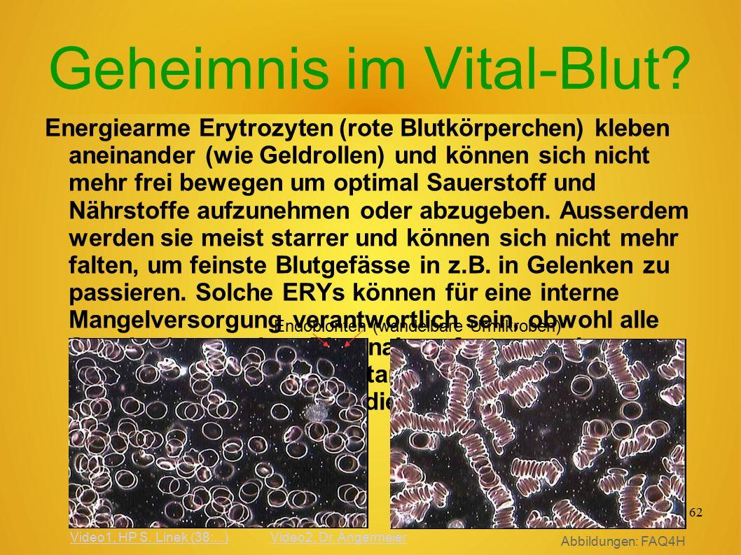 61 E xtra- Z elluläre M atrix Aufbau und Versorgun g im Binde- gewebe Bildquelle, Jürgen Giebel: (Q) http://www.anatomie-und- schmerz.de/Referate/2006/Abs tract_2006_07.pdf(Q) http://www.anatomie-und- schmerz.de/Referate/2006/Abs tract_2006_07.pdf Nerven hülle Organismus- steuerung Zellkern