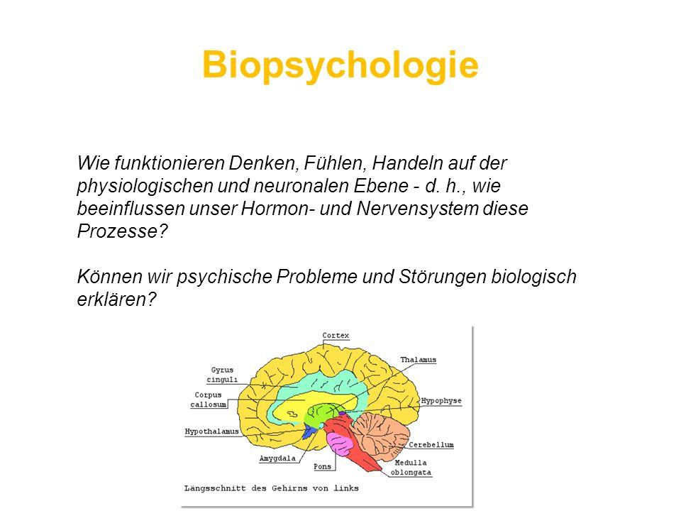 Biopsychologie Wie funktionieren Denken, Fühlen, Handeln auf der physiologischen und neuronalen Ebene - d. h., wie beeinflussen unser Hormon- und Nerv