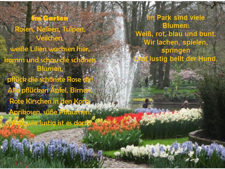 Im Park sind viele Blumen : Weiß, rot, blau und bunt.