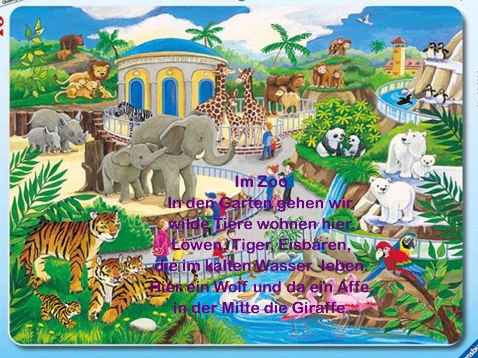 Im Zoo In den Garten gehen wir, wilde Tiere wohnen hier.