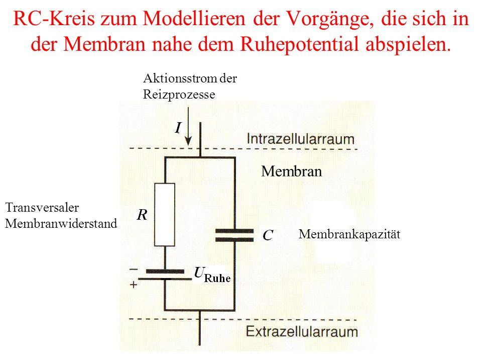 RC-Kreis zum Modellieren der Vorgänge, die sich in der Membran nahe dem Ruhepotential abspielen.