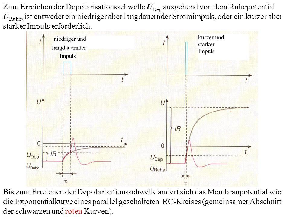 Zum Erreichen der Depolarisationsschwelle U Dep ausgehend von dem Ruhepotential U Ruhe, ist entweder ein niedriger aber langdauernder Stromimpuls, oder ein kurzer aber starker Impuls erforderlich.