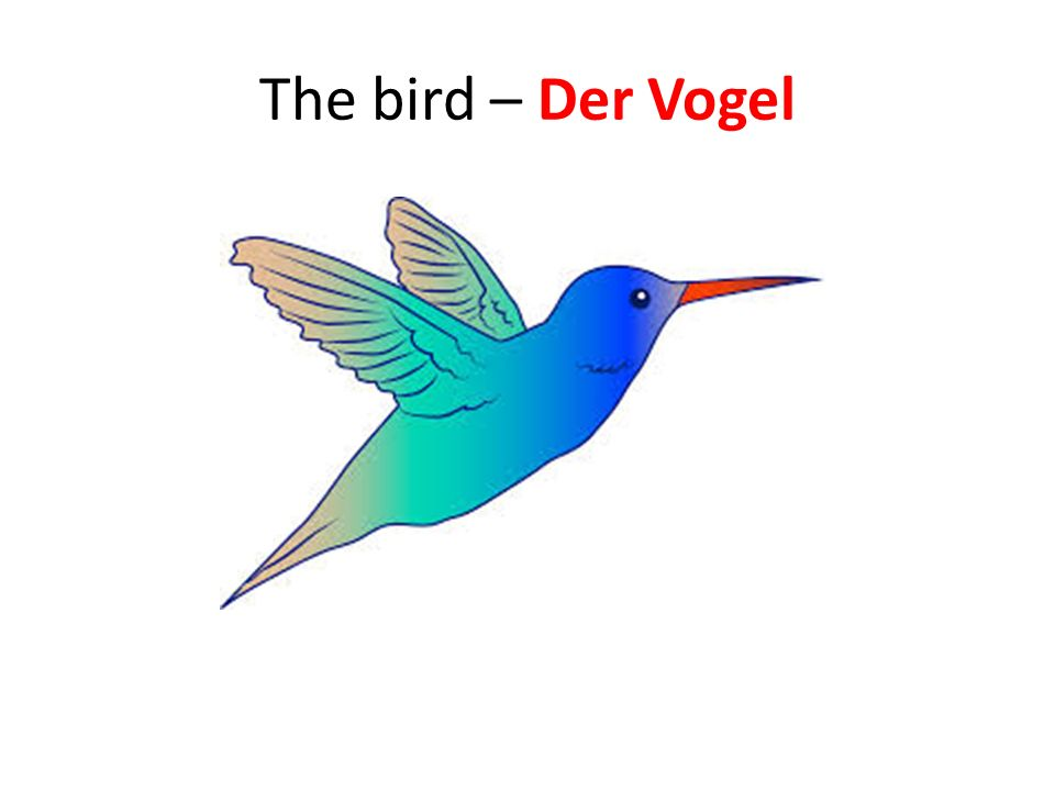 The bird – Der Vogel