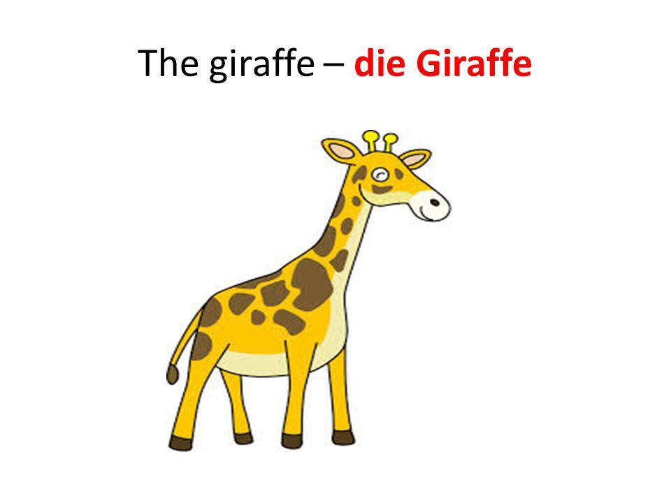 The giraffe – die Giraffe