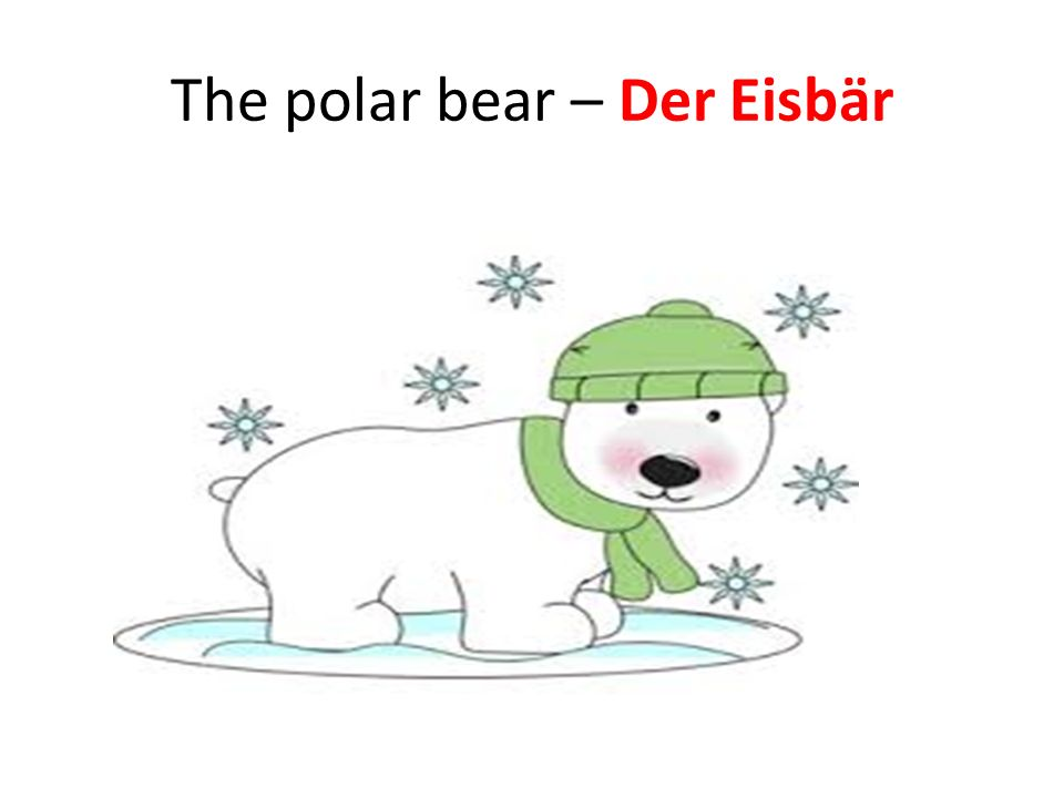 The polar bear – Der Eisbär