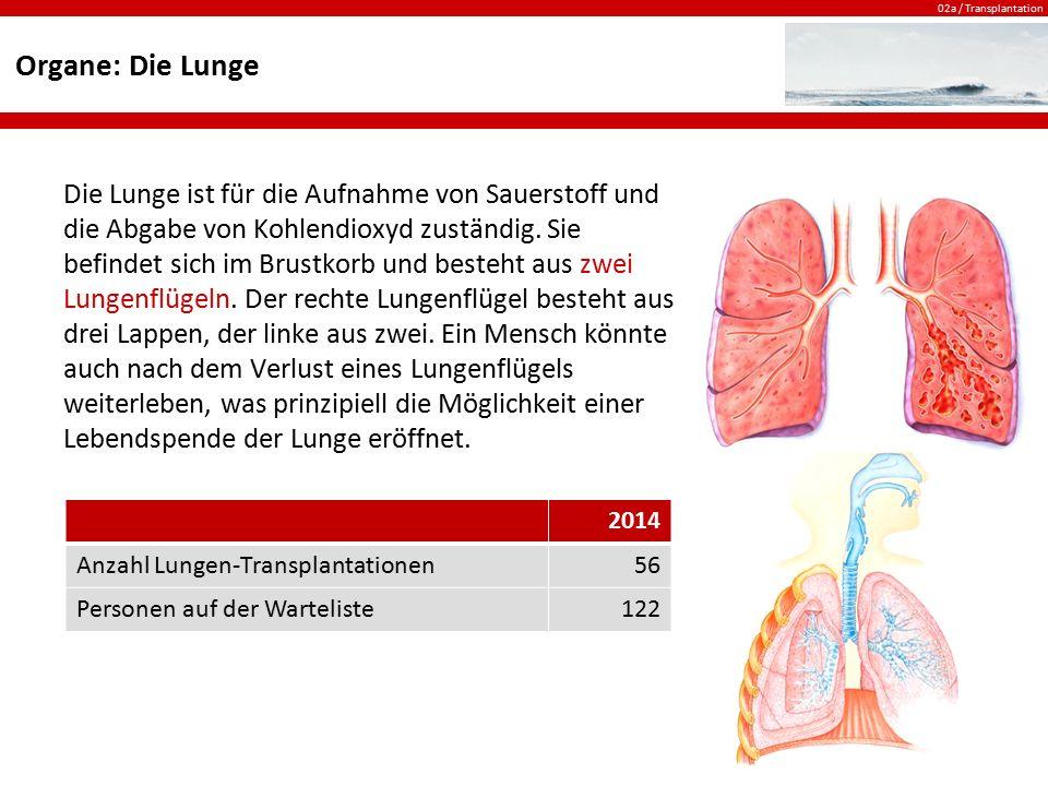 02a / Transplantation Organe: Die Lunge Die Lunge ist für die Aufnahme von Sauerstoff und die Abgabe von Kohlendioxyd zuständig. Sie befindet sich im