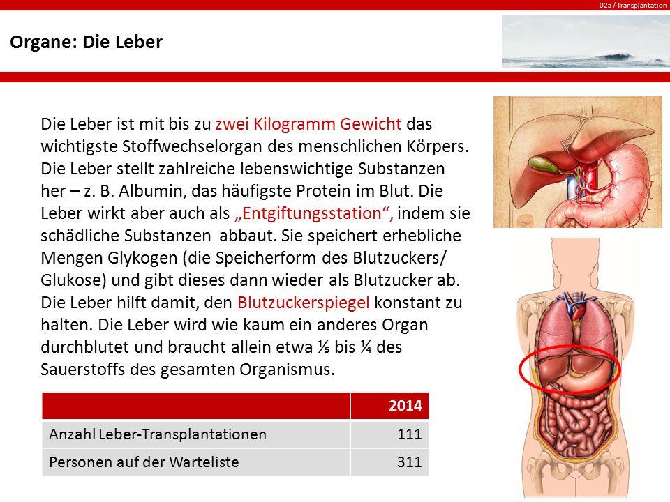 02a / Transplantation Organe: Die Leber Die Leber ist mit bis zu zwei Kilogramm Gewicht das wichtigste Stoffwechselorgan des menschlichen Körpers. Die