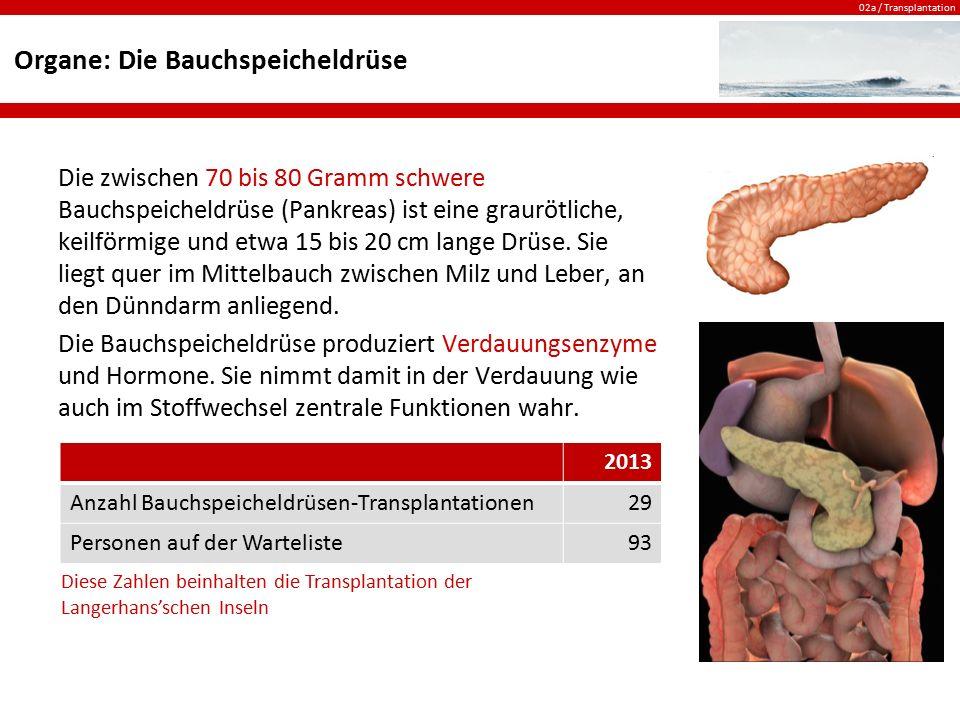 02a / Transplantation Organe: Die Bauchspeicheldrüse Die zwischen 70 bis 80 Gramm schwere Bauchspeicheldrüse (Pankreas) ist eine graurötliche, keilför