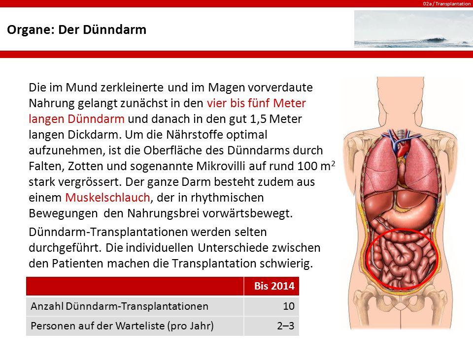 02a / Transplantation Organe: Der Dünndarm Die im Mund zerkleinerte und im Magen vorverdaute Nahrung gelangt zunächst in den vier bis fünf Meter lange