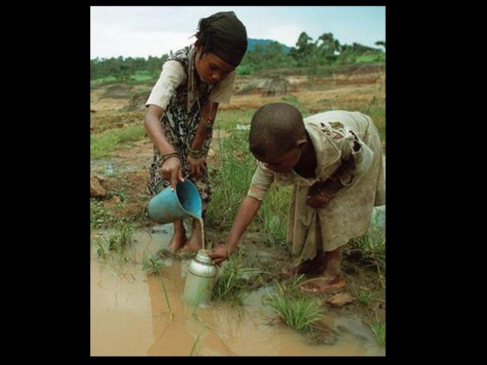 Jedes Jahr werden zwischen 1 und 10 Millionen Tonnen Öl verschüttet, was viele Arten tötet und die Ökosysteme in den Regionen zerstört.