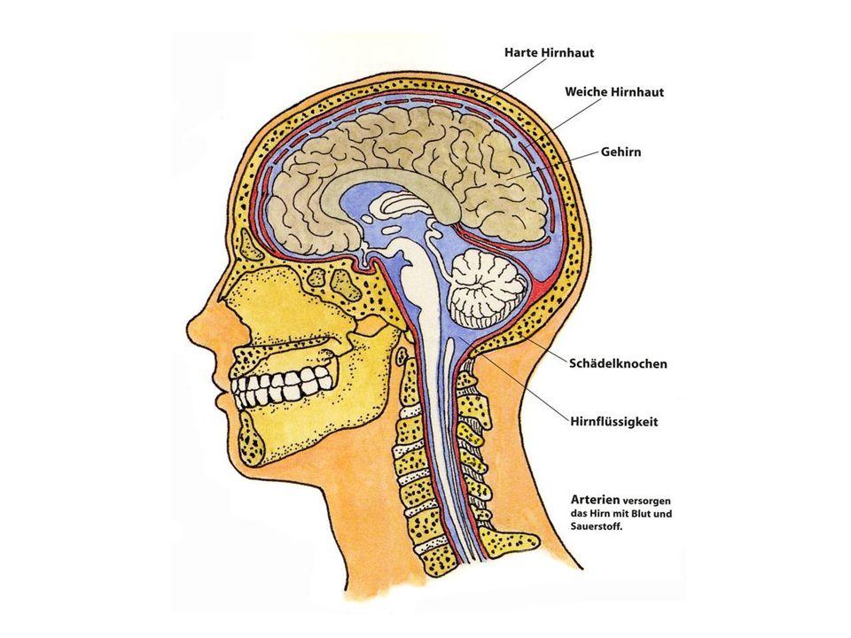 Migräne - Triggerfaktoren Hormonschwankungen bei Frauen Änderungen im Schlaf-/Wachrhythmus (Wochenend- Migräne) große Höhe, Aufenthalt in Kälte, verqualmte Räume Erwartungsangst, Stress, Entlastungssituationen Rotwein, Käsesorten, Schokolade Schwankungen des Koffeinspiegels Wettereinflüsse