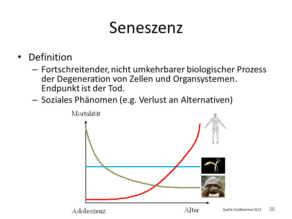 Seneszenz Definition – Fortschreitender, nicht umkehrbarer biologischer Prozess der Degeneration von Zellen und Organsystemen. Endpunkt ist der Tod. –