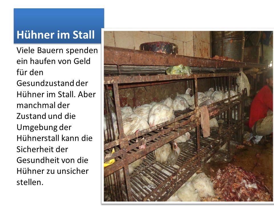 Hühner im Stall Viele Bauern spenden ein haufen von Geld für den Gesundzustand der Hühner im Stall. Aber manchmal der Zustand und die Umgebung der Hüh