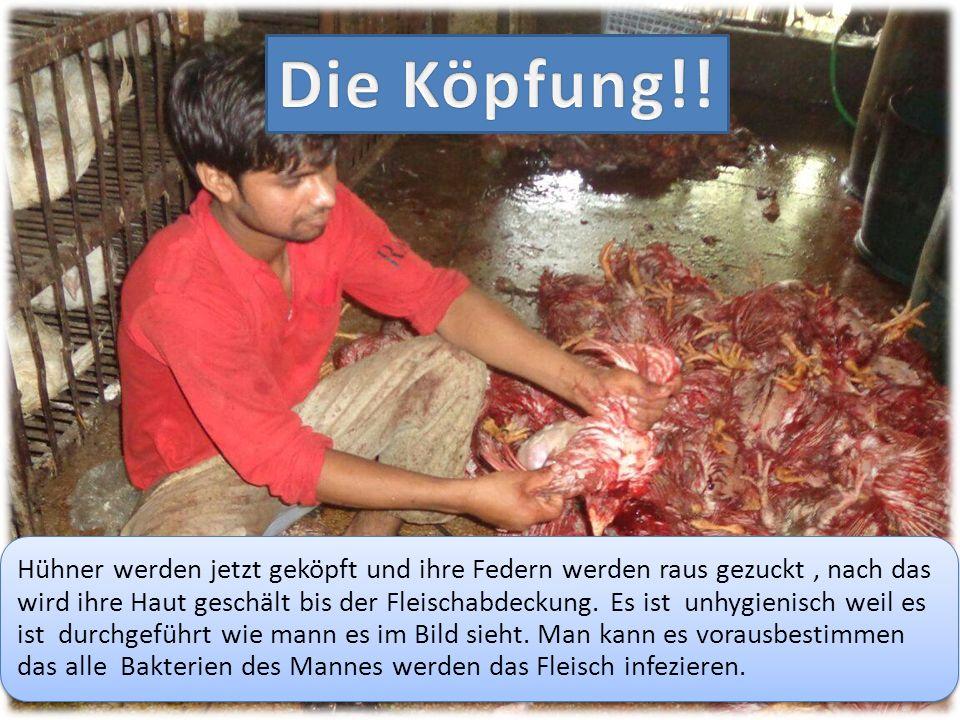 Hühner werden jetzt geköpft und ihre Federn werden raus gezuckt, nach das wird ihre Haut geschält bis der Fleischabdeckung. Es ist unhygienisch weil e