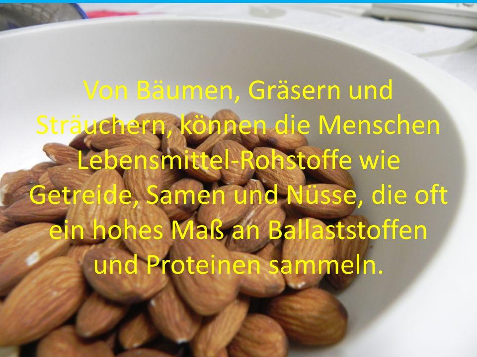 Von Bäumen, Gräsern und Sträuchern, können die Menschen Lebensmittel-Rohstoffe wie Getreide, Samen und Nüsse, die oft ein hohes Maß an Ballaststoffen und Proteinen sammeln.