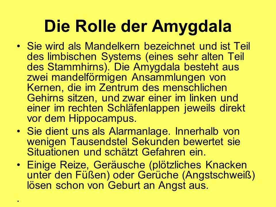 Die Rolle der Amygdala (2) Dabei spielt die Vernetzung im Gehirn eine wesentliche Rolle.