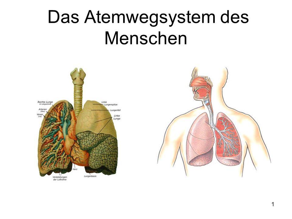 2 Aufbau und Funktion der Lunge und Atemwege Die Lunge besteht aus den beiden Lungenflügeln, die ihrerseits in mehrere Lungenlappen unterteilt sind.