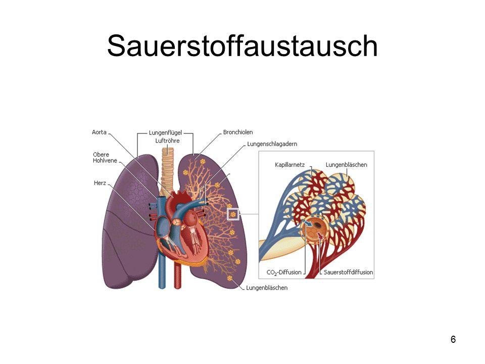 7 Begriffe zur Atmung normale Atmung = Eupnoe erschwerte Atmung = Dyspnoe Atemstillstand = Apnoe zu schnelle Atmung = Tachypnoe zu langsame Atmung = Bradypnoe Respiration = Atmung Inspiration = Einatmung Expiration = Ausatmung abdominelle Atmung = Bauchatmung kostale Atmung = Brustatmung Aspiration = Flüssigkeit,Nahrung,Fremdkörper gelangen ins Atemsystem Atemfrequenz: 16-20 Atemzüge pro Minute (bei einem Erwachsenen) Atemqualität: tief; flach; hechelnd; keuchend (bei Anstrengung); rasselnd (bei einem Lungenödem); schnappend (beim Sterbenden); röchelnd (bei Atemnot); geräuschlos; pressend (bei Asthma); pfeifend (bei Schleimhautschwellungen