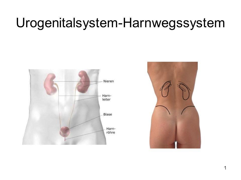 1 Urogenitalsystem-Harnwegssystem