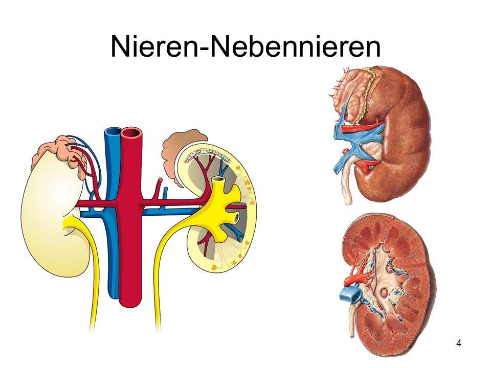 4 Nieren-Nebennieren