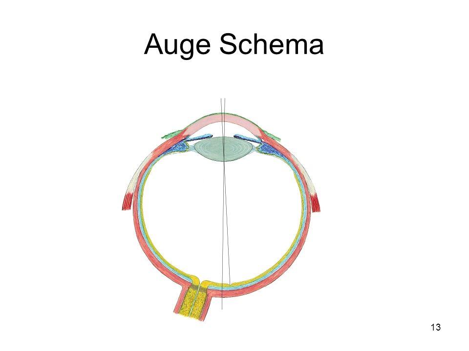 13 Auge Schema