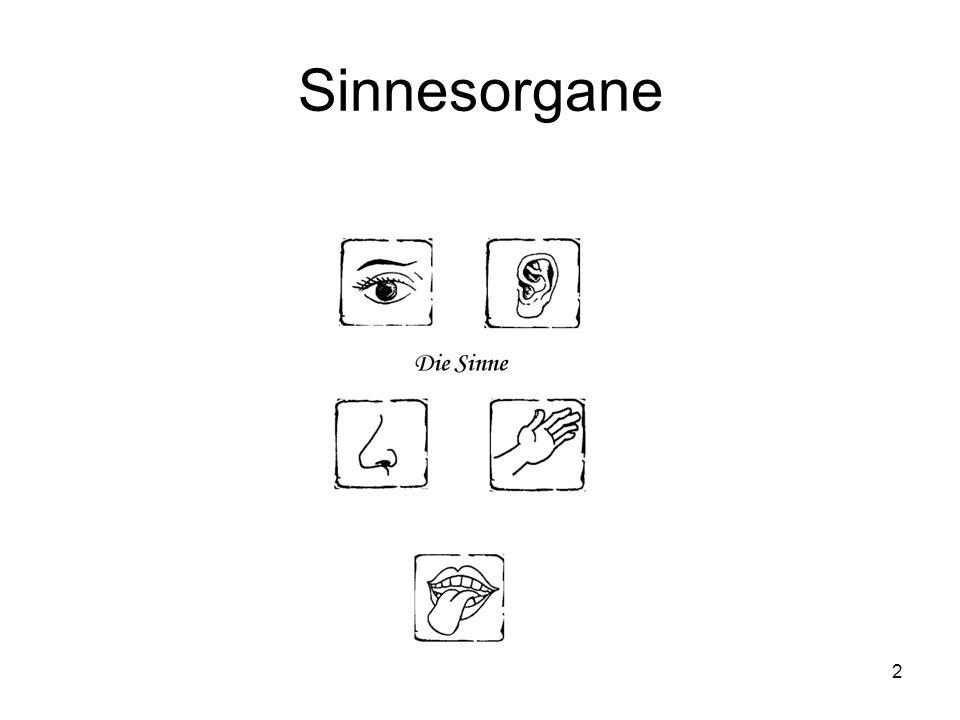 2 Sinnesorgane