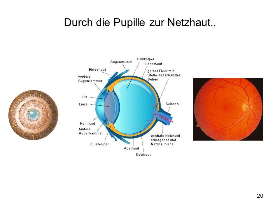 20 Durch die Pupille zur Netzhaut..