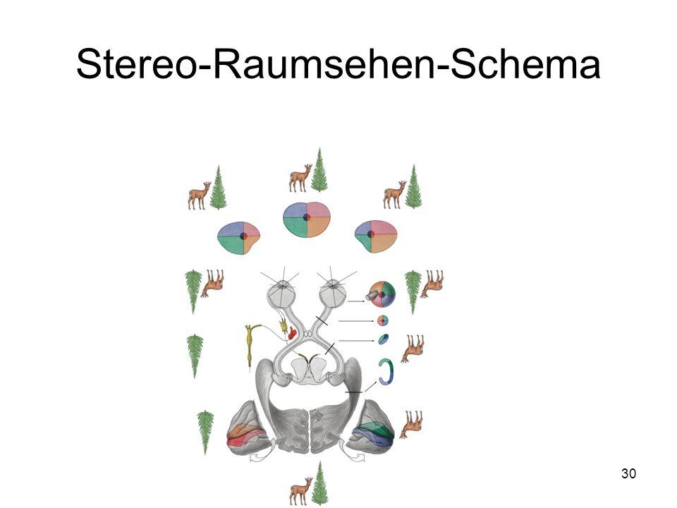 30 Stereo-Raumsehen-Schema