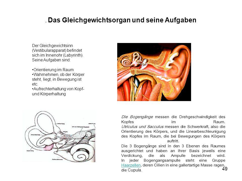 50 2.Die Haarzelle Die Haarzellen (sensorische Nervenzellen) sind in Gruppen angeordnet.