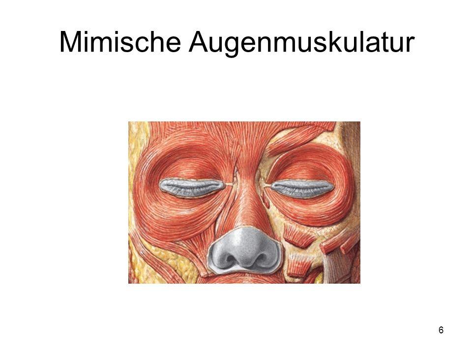 6 Mimische Augenmuskulatur