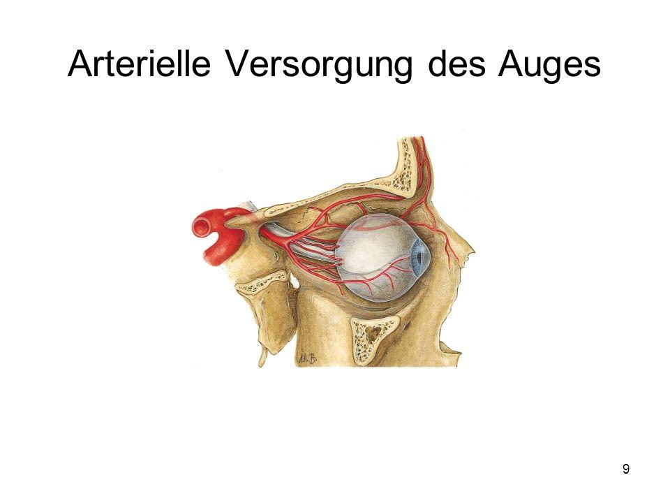 9 Arterielle Versorgung des Auges