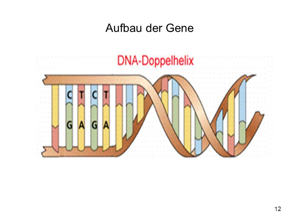 12 Aufbau der Gene
