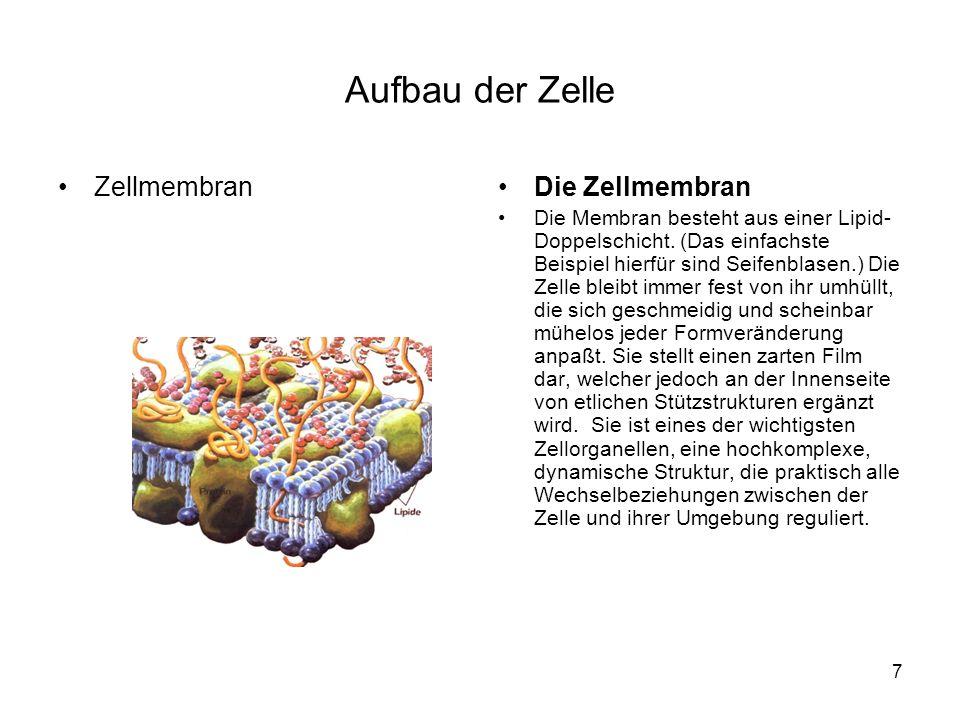 7 Aufbau der Zelle ZellmembranDie Zellmembran Die Membran besteht aus einer Lipid- Doppelschicht. (Das einfachste Beispiel hierfür sind Seifenblasen.)