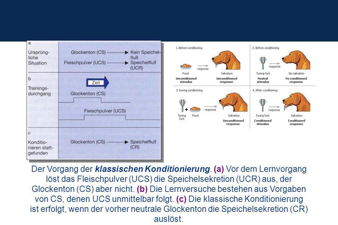 Der Vorgang der klassischen Konditionierung. (a) Vor dem Lernvorgang löst das Fleischpulver (UCS) die Speichelsekretion (UCR) aus, der Glockenton (CS)