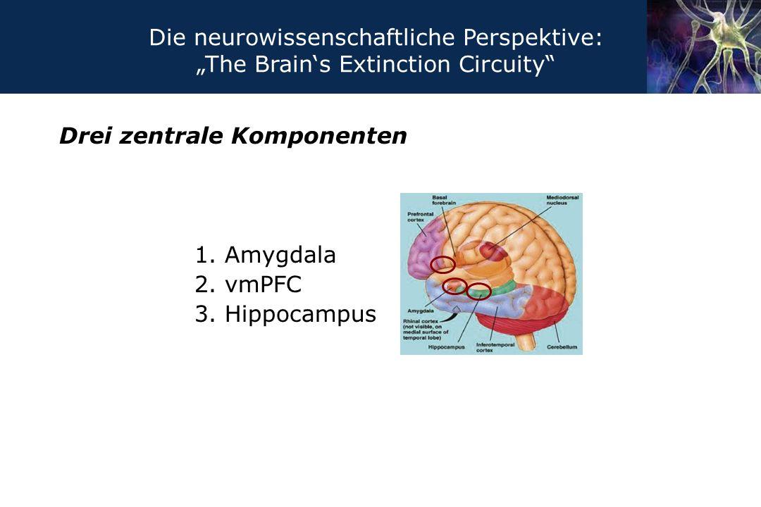 "Drei zentrale Komponenten 1. Amygdala 2. vmPFC 3. Hippocampus Die neurowissenschaftliche Perspektive: ""The Brain's Extinction Circuity"""