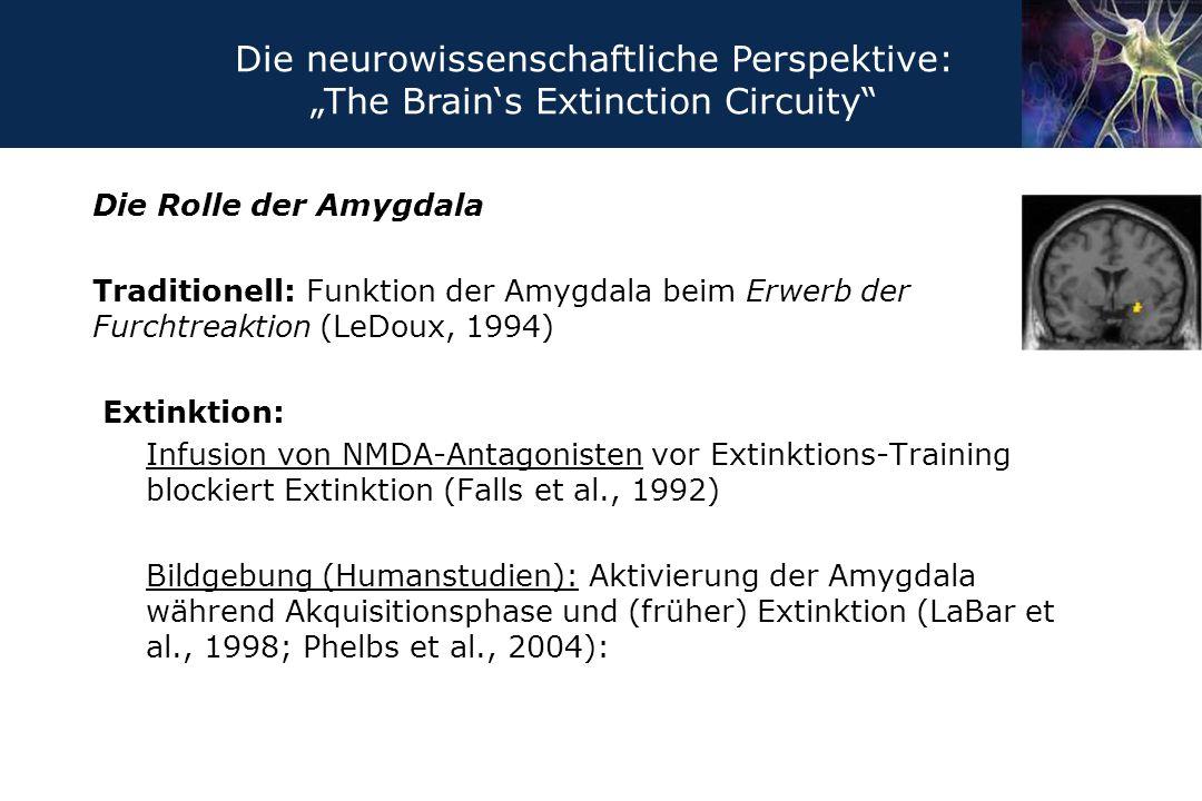 Die Rolle der Amygdala Traditionell: Funktion der Amygdala beim Erwerb der Furchtreaktion (LeDoux, 1994) Extinktion: Infusion von NMDA-Antagonisten vo