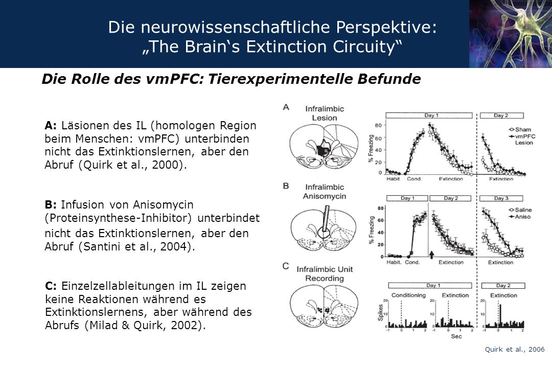 Die Rolle des vmPFC: Tierexperimentelle Befunde A: Läsionen des IL (homologen Region beim Menschen: vmPFC) unterbinden nicht das Extinktionslernen, ab