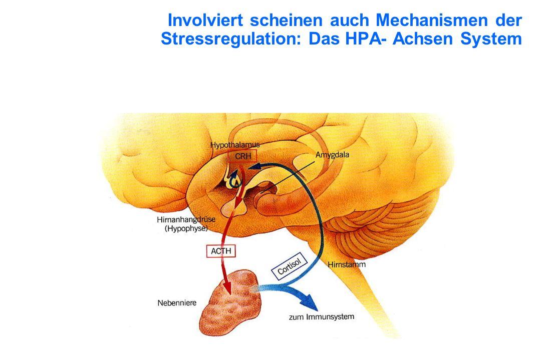 Involviert scheinen auch Mechanismen der Stressregulation: Das HPA- Achsen System