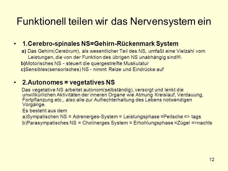 12 Funktionell teilen wir das Nervensystem ein 1.Cerebro-spinales NS=Gehirn-Rückenmark System a) Das Gehirn(Cerebrum), als wesentlicher Teil des NS, umfaßt eine Vielzahl vom Leistungen, die von der Funktion des übrigen NS unabhängig sind!!!.