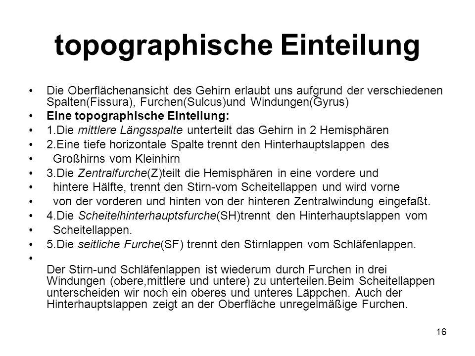 16 topographische Einteilung Die Oberflächenansicht des Gehirn erlaubt uns aufgrund der verschiedenen Spalten(Fissura), Furchen(Sulcus)und Windungen(G