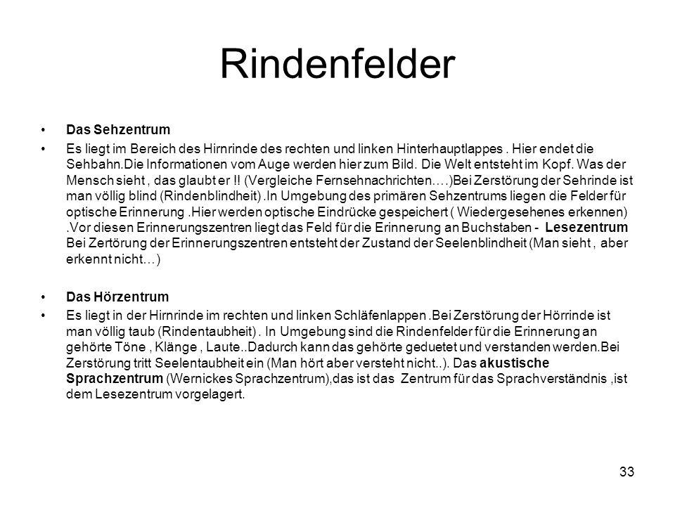 33 Rindenfelder Das Sehzentrum Es liegt im Bereich des Hirnrinde des rechten und linken Hinterhauptlappes.