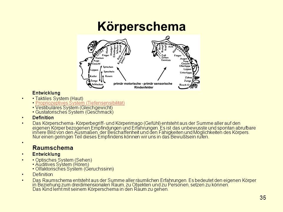 35 Körperschema Entwicklung Taktiles System (Haut) Propriozeptives System (Tiefensensibilität) Vestibuläres System (Gleichgewicht) Gustatorisches Syst