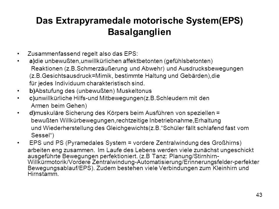 43 Das Extrapyramedale motorische System(EPS) Basalganglien Zusammenfassend regelt also das EPS: a)die unbewußten,unwillkürlichen affektbetonten (gefü
