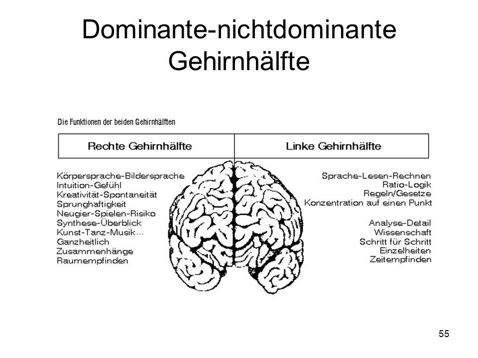 55 Dominante-nichtdominante Gehirnhälfte