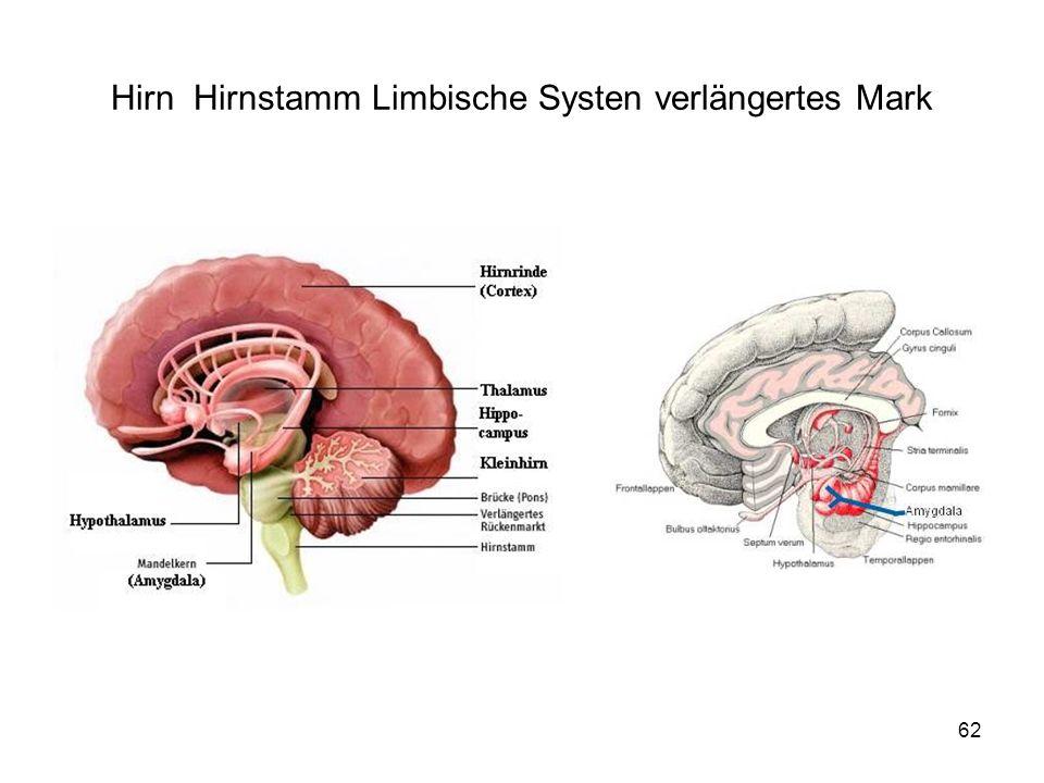 62 Hirn Hirnstamm Limbische Systen verlängertes Mark