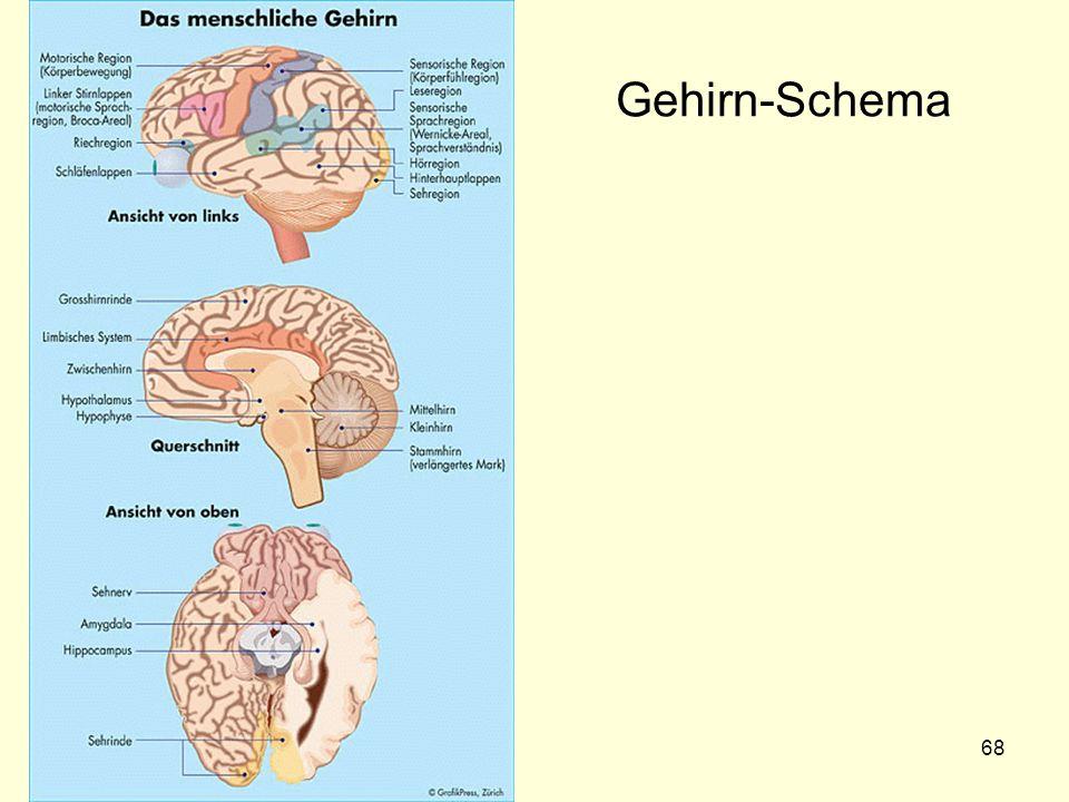 68 Gehirn-Schema