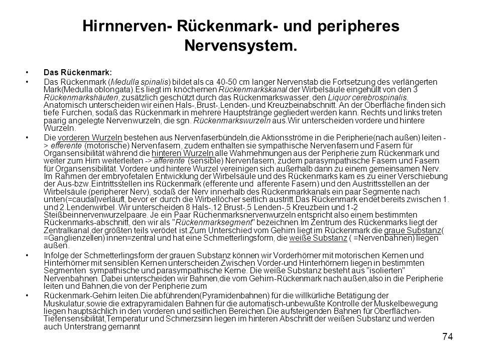 74 Hirnnerven- Rückenmark- und peripheres Nervensystem.