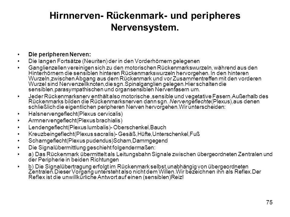 75 Hirnnerven- Rückenmark- und peripheres Nervensystem.